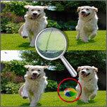 5个不同点小狗身上的斑点